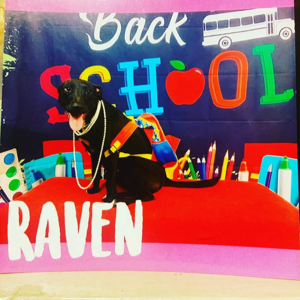Raven Back to School